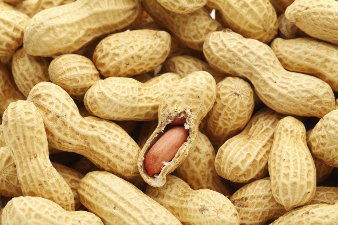 arachides: corriger les manquements de la collecte de semences - la
