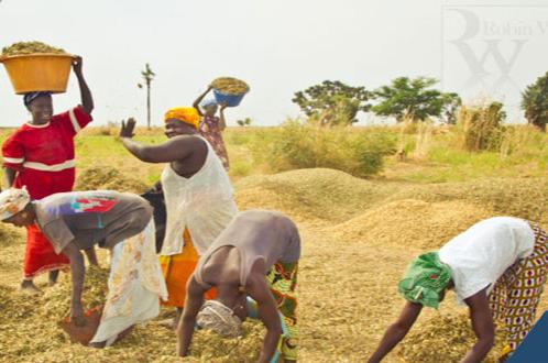 L'Etat du Sénégal valide un plan d'urgence de 11 milliards en vue de faire face à la période de soudure