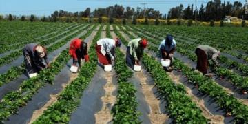 Plan Sénégal Émergent: 67 milliards de francs CFA pour la mise en œuvre du premier agro-pole dans la zone Sud du Sénégal