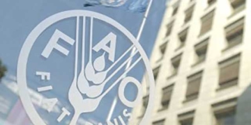 La FAO appelle à promouvoir les femmes autochtones dans les instances de décision