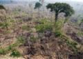Dégradation des écosystèmes: L'Afrique perd annuellement 68 milliards de dollars