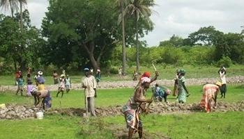 Agriculture: Macky Sall veut renforcer les Domaines agricoles communautaires