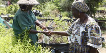 Micro Jardinage au Sénégal : Un business ''vert''