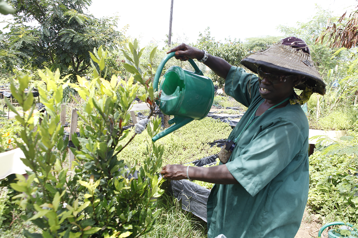 « Maman Africa », « la passionnée des plantes »