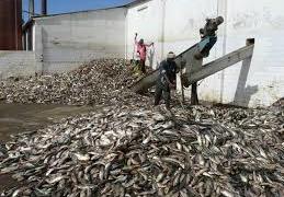 Les acteurs de la pêche prônent une meilleure gestion des petits pélagiques