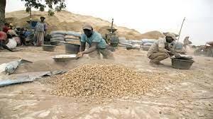 Campagne de commercialisation arachidière : Plus de 500 000 tonnes déjà collectées