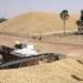 Campagne de commercialisation : Plus de 674 tonnes d'arachides collectées (Ministre)