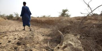 Insécurité alimentaire et sécheresse au Sahel: L'ONU envisage de débloquer un fonds d'urgence de 30 millions de dollars pour aider les pays de la région