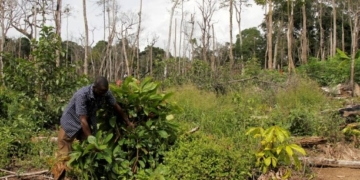 Lutte contre la déforestation : La Côte-d'Ivoire doit mobiliser 616 milliards de FCFA