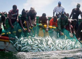 La pêche et l'aquaculture en danger face aux changements climatiques