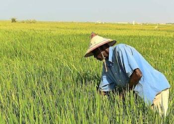 Vallée du Fleuve: La Banque agricole accorde 6 milliards à 514 organisations paysannes