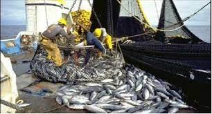 Un Conseil Présidentiel sur le secteur des pêches, en fin mai